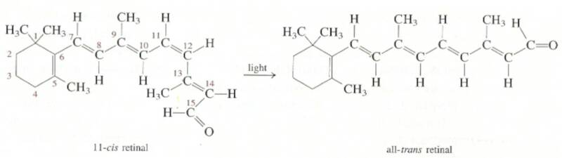 JHT :: On the Nature of the Human Chemical Bond